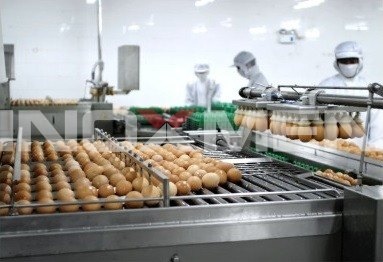 Egg-Products-Engineering-Examples-Egg-Breaker